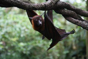 עטלפים מזיקים