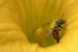 הדברת דבורים - צרעות - הרחקת דבורים - מלכודות