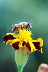עקיצות - יתושים - פרעושים - פשפשים - דבורים